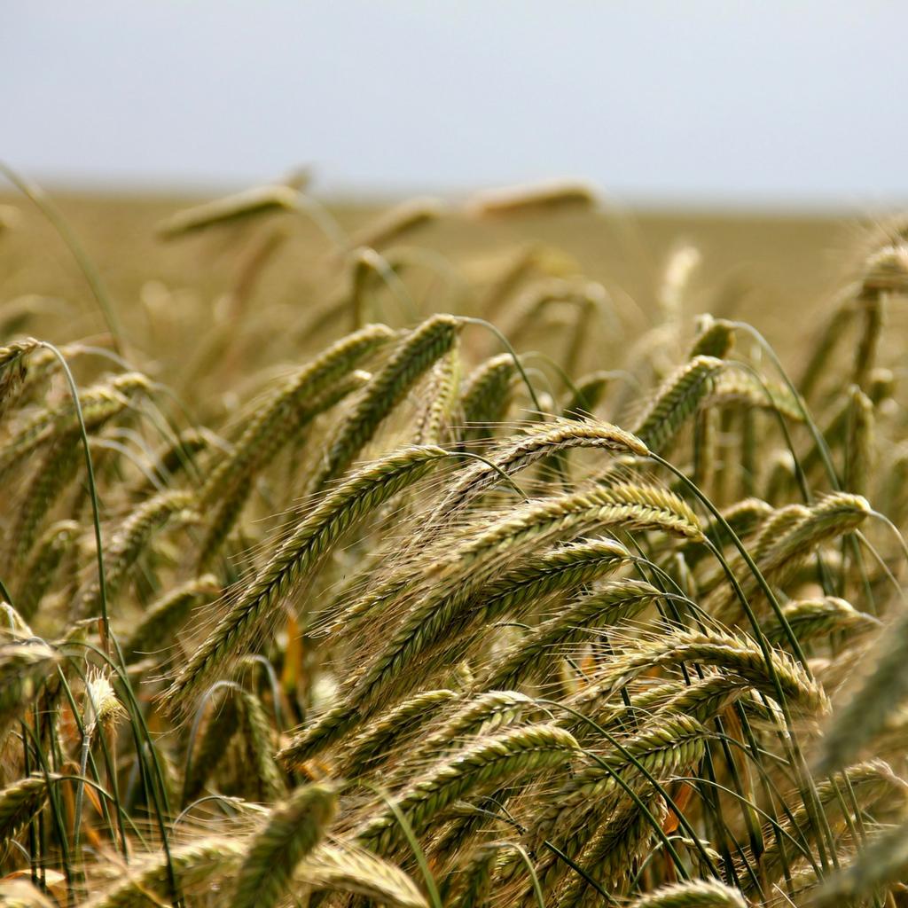 santé végétale agrooh traduction secteur